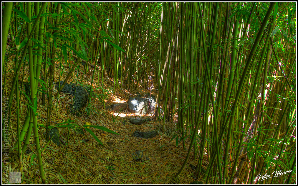 bamboo trail