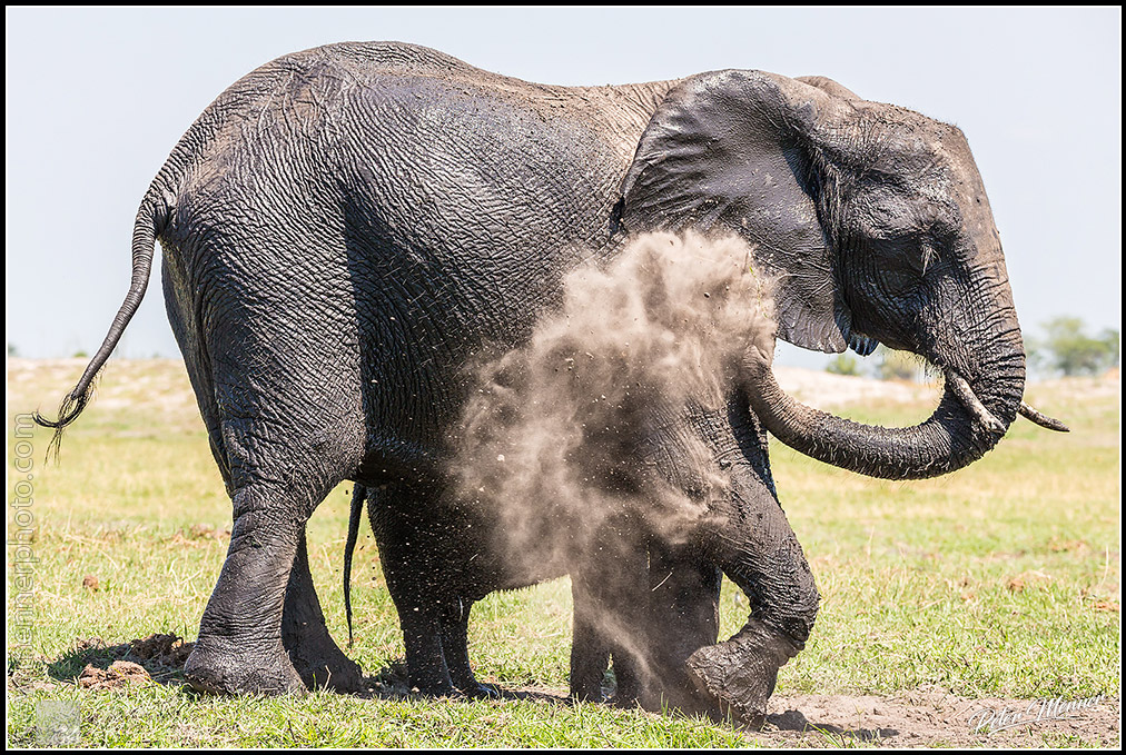 elephant dust mud